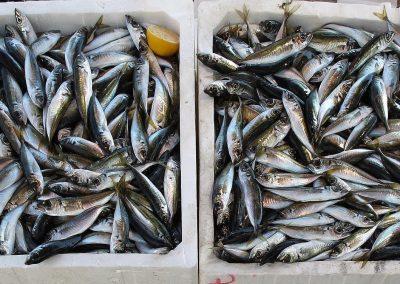 MÒDUL 5: Aliments constructors. Beneficis del peix