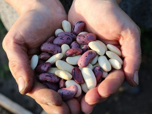 MÒDUL 3: Aliments energètics. Llegums apetitoses i nutritives